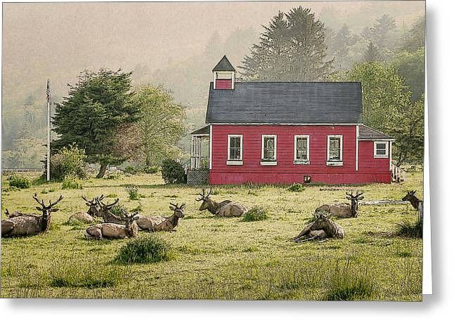 Red School House Greeting Cards - Elk in the school yard Greeting Card by John Trax