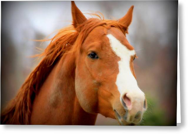 Gnarly Greeting Cards - Equine Reverie VIII Greeting Card by Aurelio Zucco