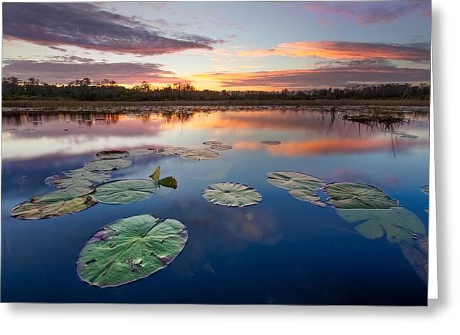 Coastal Preserve Greeting Cards - Everglades at Sunset Greeting Card by Debra and Dave Vanderlaan