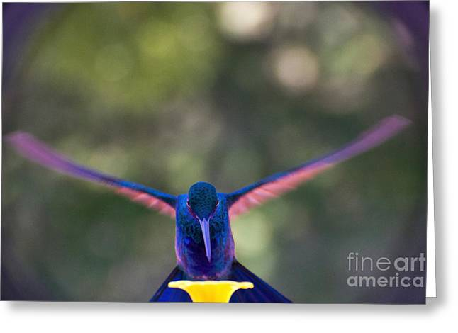Fastest Bird Greeting Cards - Eye On The Prize Greeting Card by Al Bourassa