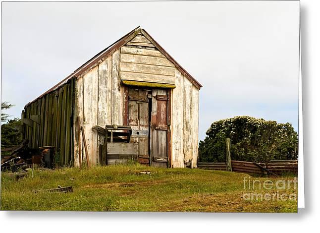 Falklands Greeting Cards - Falkland Island Farm Greeting Card by John Shaw