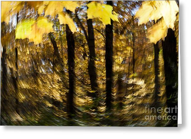 fall abstract Greeting Card by Steven Ralser