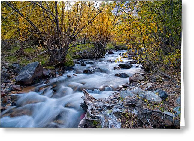 Eastern Sierra Greeting Cards - Fall at Big Pine Creek Greeting Card by Cat Connor