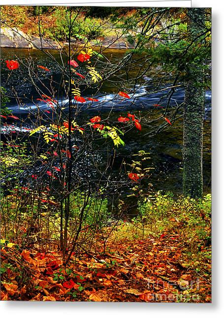 Autumn Greeting Cards - Fall forest and river Greeting Card by Elena Elisseeva