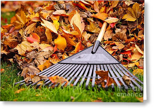 Chores Greeting Cards - Fall leaves with rake Greeting Card by Elena Elisseeva