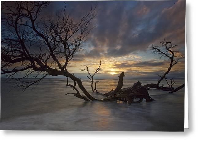 ; Maui Greeting Cards - Fallen Tree Greeting Card by James Roemmling