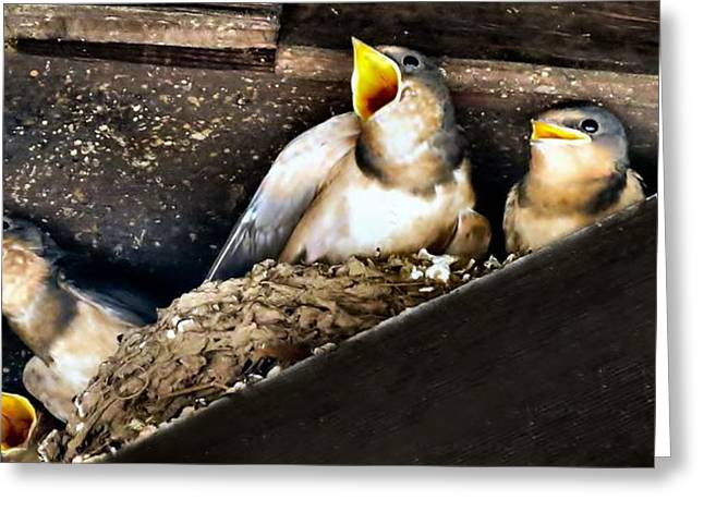 Swallow Nestlings Greeting Cards - Feed Me Greeting Card by Michelle Milano
