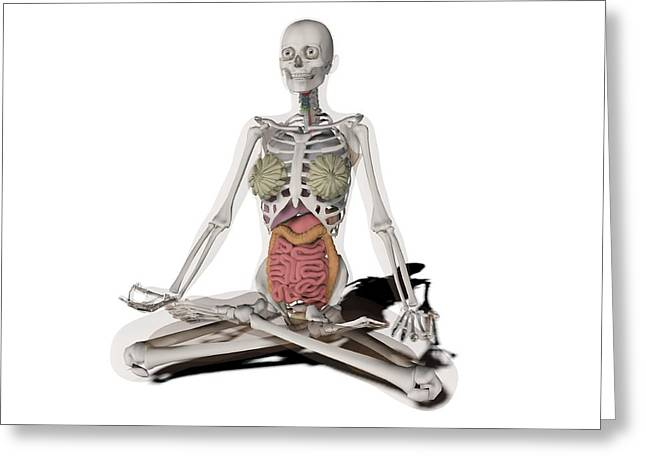 Cut-outs Greeting Cards - Female anatomy, artwork Greeting Card by Science Photo Library