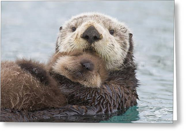 Caring Mother Greeting Cards - Female Sea Otter Holding Newborn Pup Greeting Card by Milo Burcham