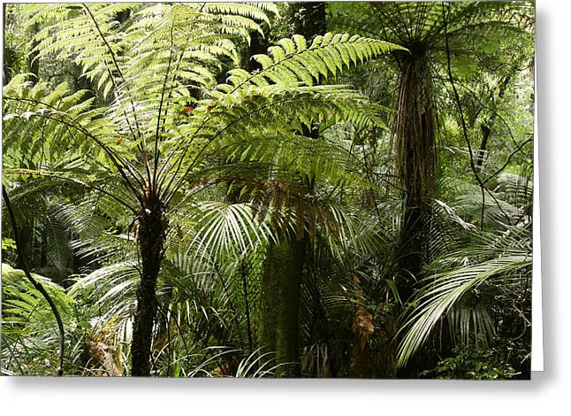Tropical Photographs Greeting Cards - Fern trees Greeting Card by Les Cunliffe