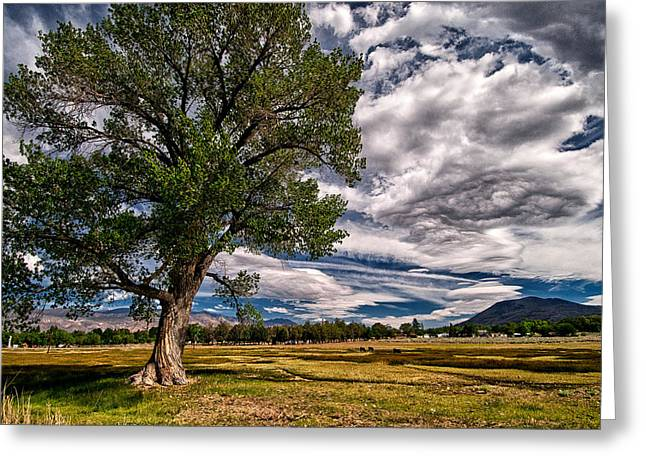Field. Cloud Greeting Cards - Field of Dreams Greeting Card by Cat Connor