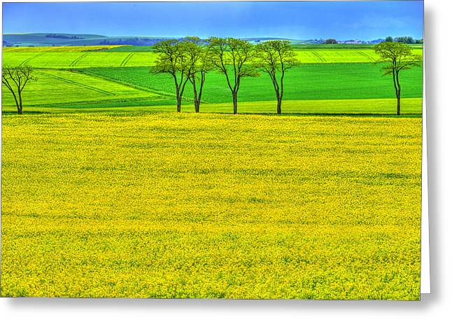 Fields Of Dreams Greeting Card by Midori Chan