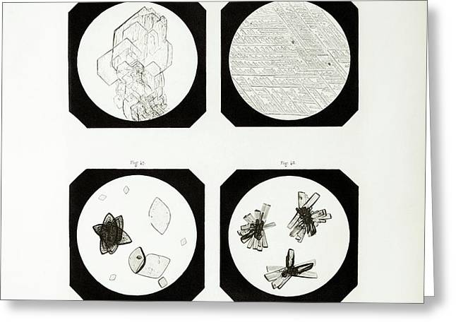 First Ever Photomicrographs Greeting Card by British Library