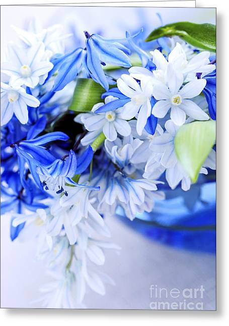 Fresh Greeting Cards - First spring flowers Greeting Card by Elena Elisseeva