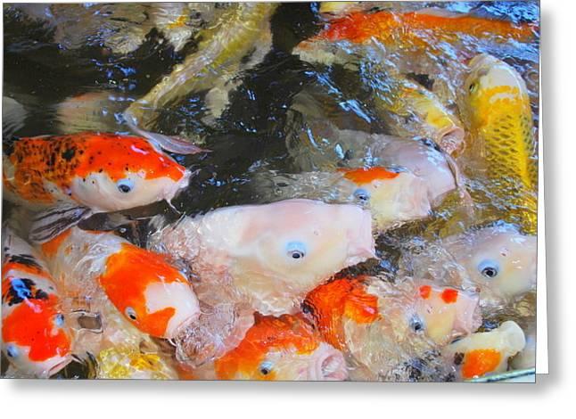 Fish Greeting Card by Tonyah Nichols