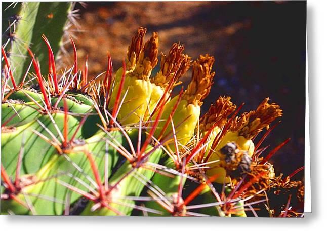 David Rizzo Greeting Cards - Fishhook Cactus Greeting Card by David Rizzo