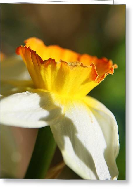 Wildflower Fine Art Greeting Cards - Floral Cup  Greeting Card by Neal  Eslinger