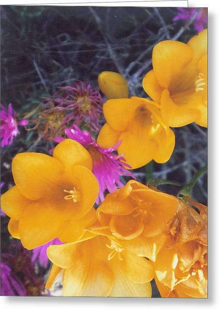 Robert Bray Greeting Cards - Floral Wonder Greeting Card by Robert Bray