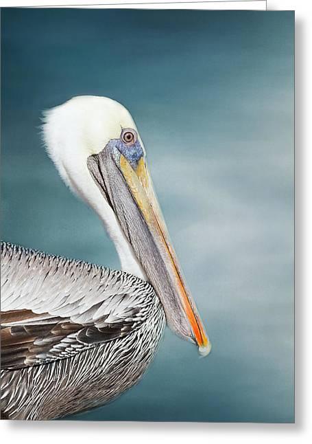 Florida Brown Pelican  Greeting Card by Kim Hojnacki