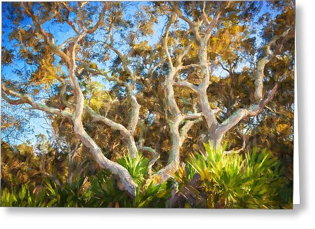 Oak Hammocks Greeting Cards - Florida Scrub Oaks Painted   Greeting Card by Rich Franco