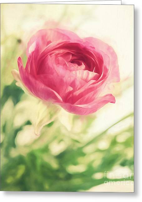 Cardboard Digital Greeting Cards - Flower Greeting Card by HD Connelly