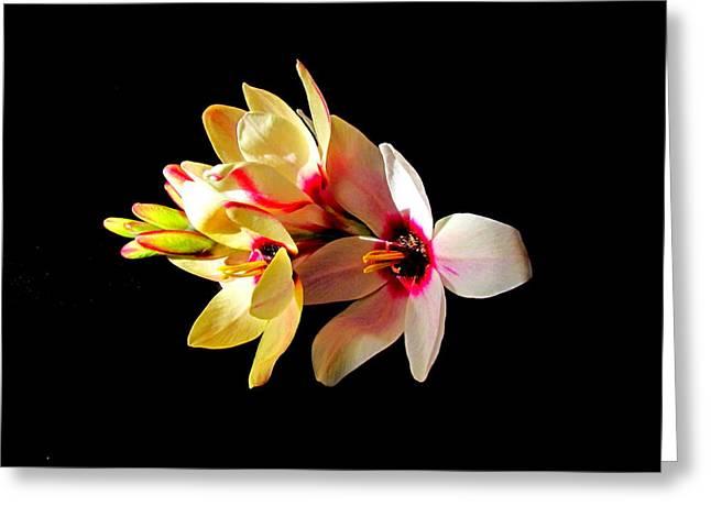 Joyce Woodhouse Greeting Cards - Flower. Greeting Card by Joyce Woodhouse