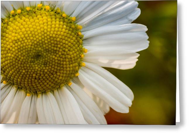 Kjona Greeting Cards - Flower Greeting Card by Mirra Photography