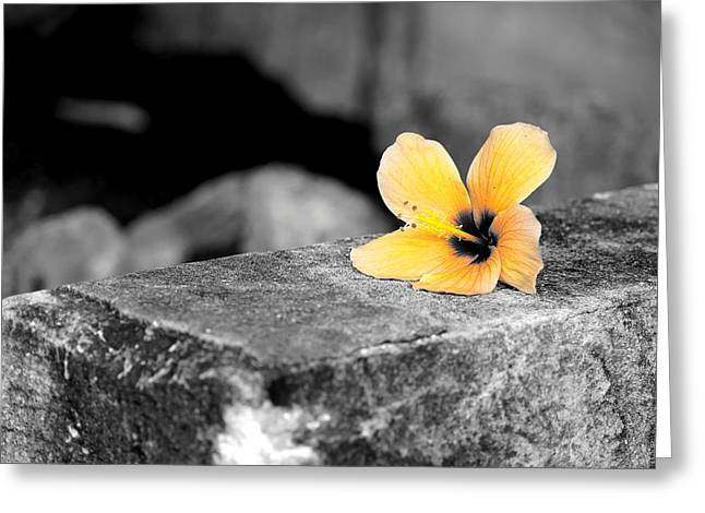 Ledge Greeting Cards - Flower on a Ledge Greeting Card by Mountain Dreams