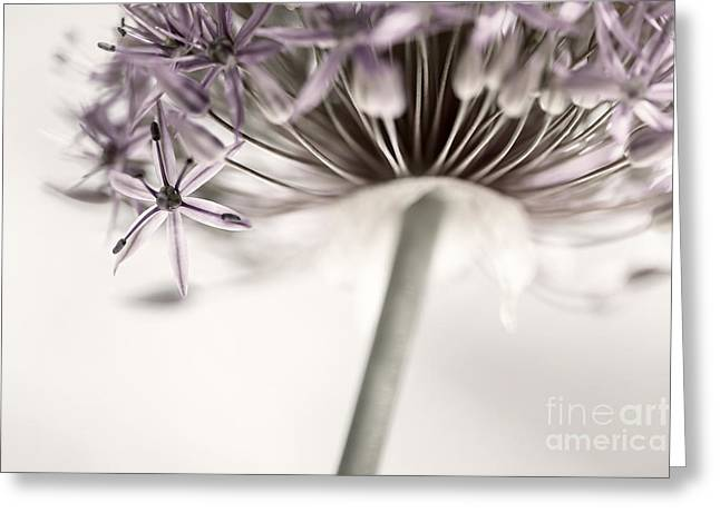 Star Shape Greeting Cards - Flowering onion flower Greeting Card by Elena Elisseeva