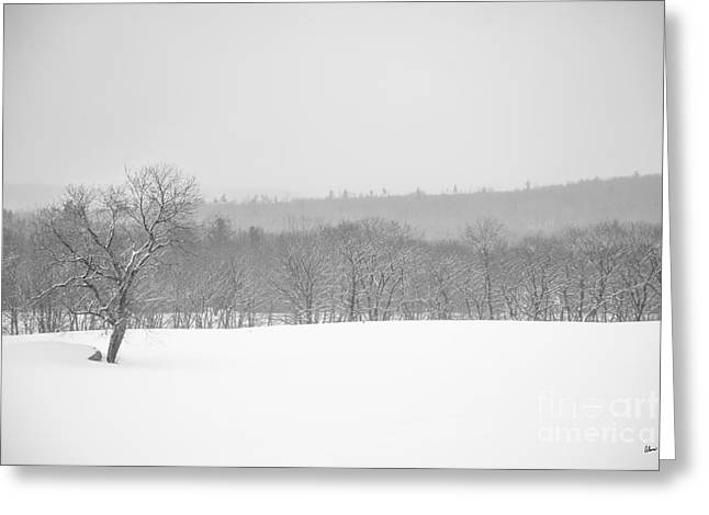 Snowy Day Greeting Cards - Foggy Winters Day Greeting Card by Alana Ranney