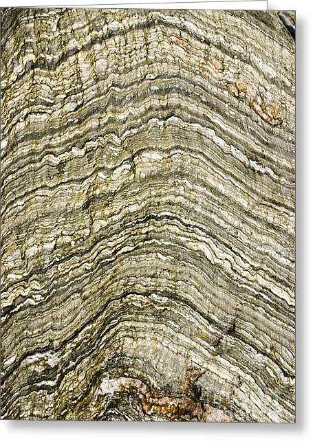 Contortions Greeting Cards - Folded Rock Strata Greeting Card by Mark Williamson