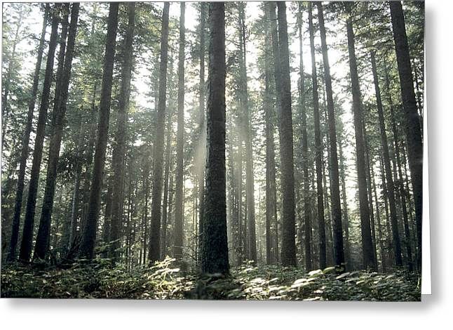 View From Below Greeting Cards - Forest Greeting Card by Bernard Jaubert