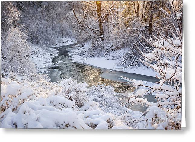 Sunflare Greeting Cards - Forest creek after winter storm Greeting Card by Elena Elisseeva