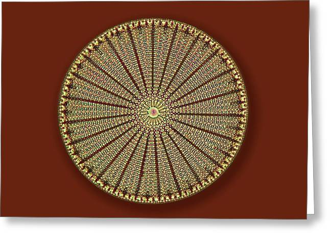 Fossil Diatom Greeting Card by Frank Fox