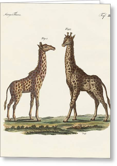 Giraffe Drawings Greeting Cards - Four-footed Animals Greeting Card by Splendid Art Prints