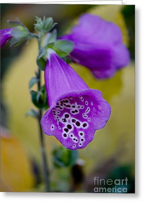 Foxglove Greeting Card by Ivete Basso Photography