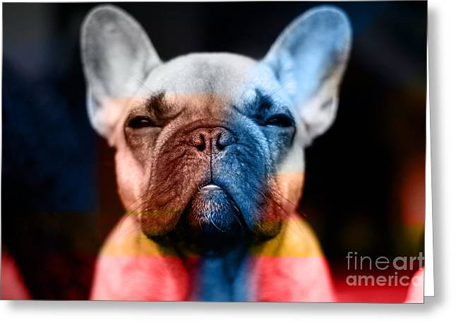 Dog Greeting Cards - French Bulldog  Greeting Card by Marvin Blaine