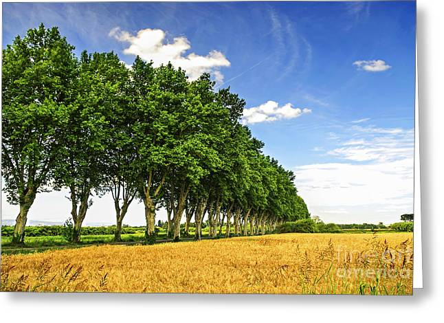 Shade Greeting Cards - French country road Greeting Card by Elena Elisseeva