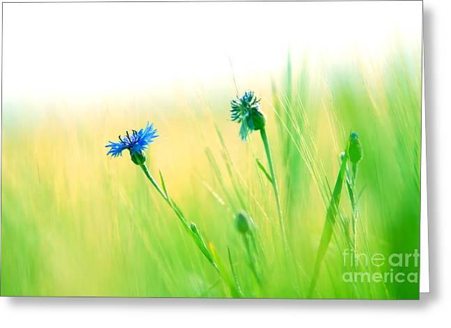 Innocence Greeting Cards - Fresh meadow background Greeting Card by Michal Bednarek