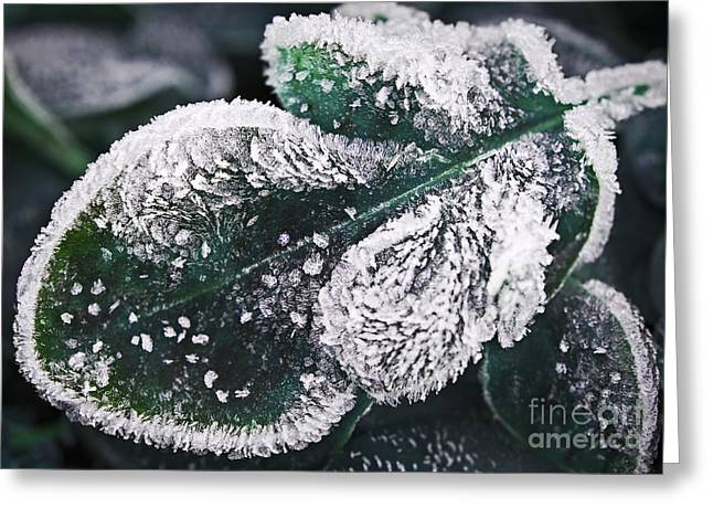 Frosty Greeting Cards - Frosty leaf Greeting Card by Elena Elisseeva