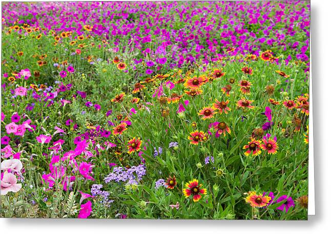 Wildseed Greeting Cards - Garden Delight Greeting Card by Lynn Bauer