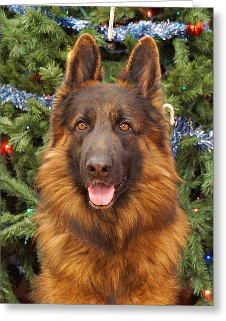 Indiana Christmas Greeting Cards - German Shepherd Christmas Card Greeting Card by Sandy Keeton