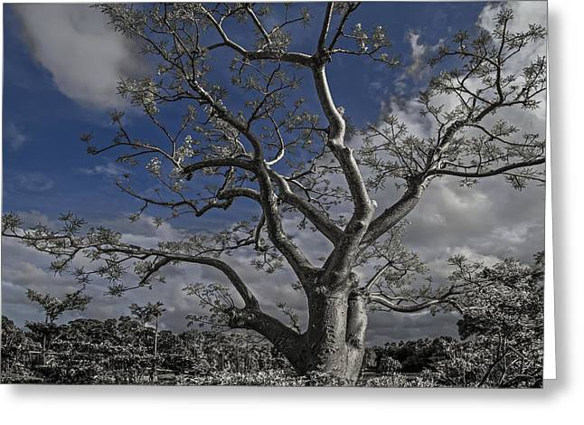 Ghost Tree Greeting Card by Debra and Dave Vanderlaan