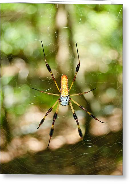 Jackson County Greeting Cards - Golden Silk Spider Greeting Card by Rich Leighton