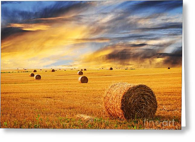 Rural Scenery Greeting Cards - Golden sunset over farm field with hay bales Greeting Card by Elena Elisseeva