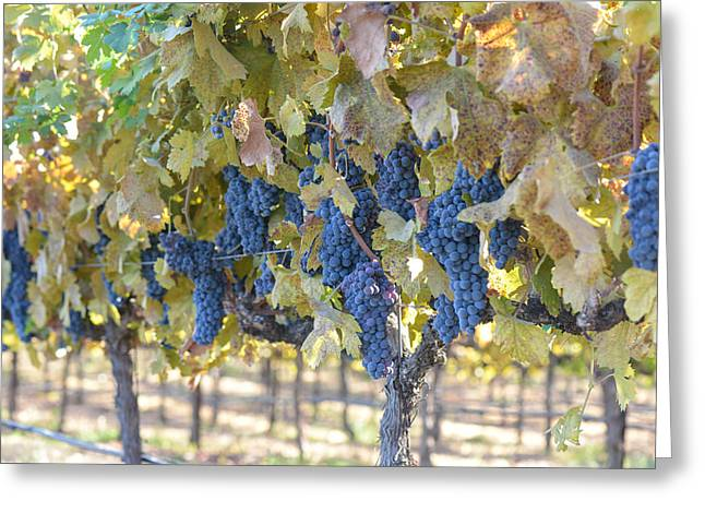 Grapevine Autumn Leaf Greeting Cards - Grapes on the Vine in Autumn Greeting Card by Brandon Bourdages