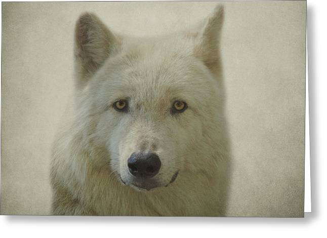 Wolves Photographs Greeting Cards - Gray Wolf Greeting Card by Sandy Keeton