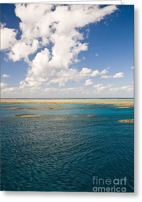 Great Barrier Reef Greeting Cards - Great Barrier Reef Greeting Card by William H. Mullins