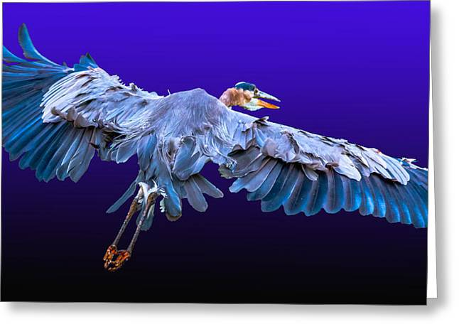 Legs Spread Greeting Cards - Great Blue Heron 2 Greeting Card by Brian Stevens
