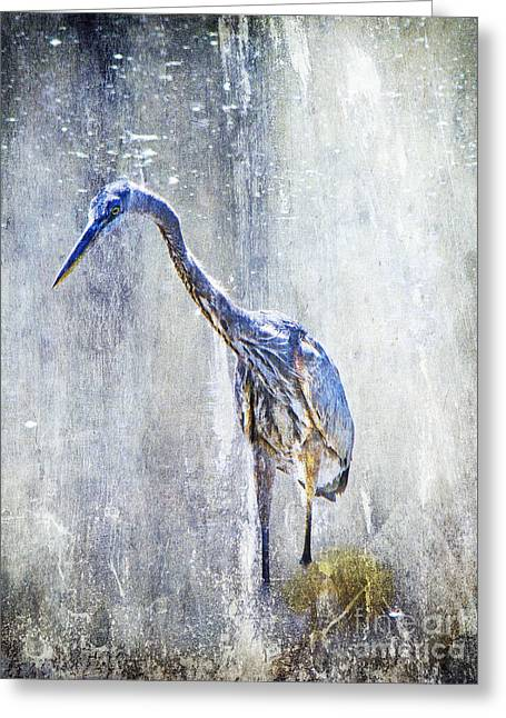 Mother Nature Greeting Cards - Great Blue Heron - Ardea herodias Greeting Card by Mother Nature